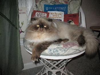 Himalayan cat wilmington nc