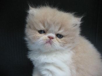 walmart cat carriers